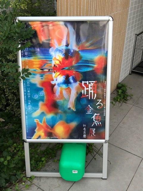 踊る金魚展に行って来ました^^